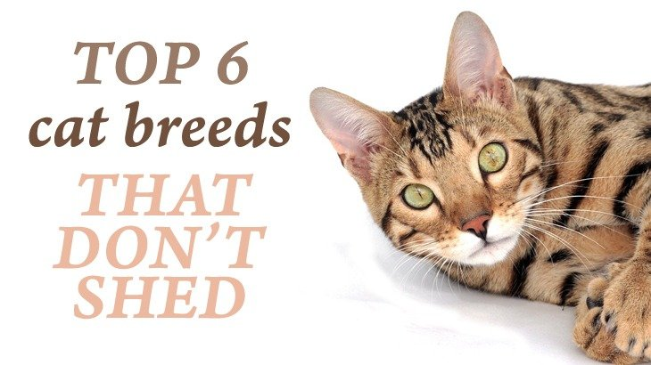 how to keep cats from shedding so much