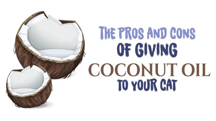 Can We Give Our Dog Coconut Oil