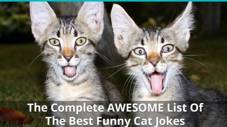 awesome list funny cat jokes