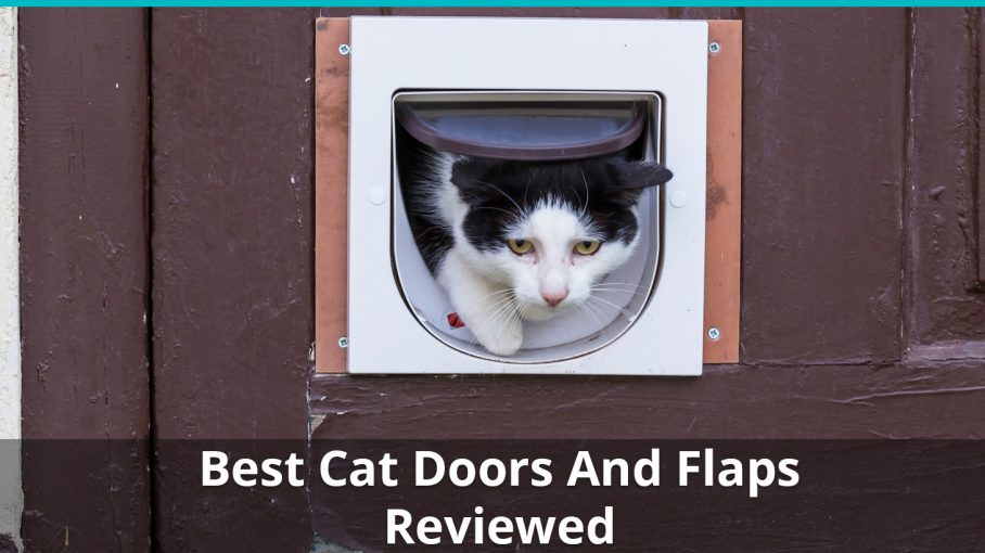 Reviews Of The Best Interior And Exterior Cat Doors And Flaps