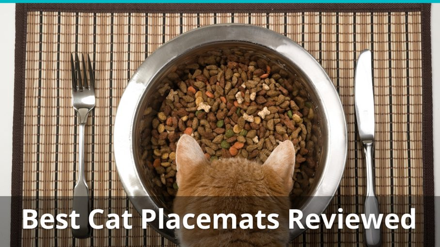 best cat placemats reviewed