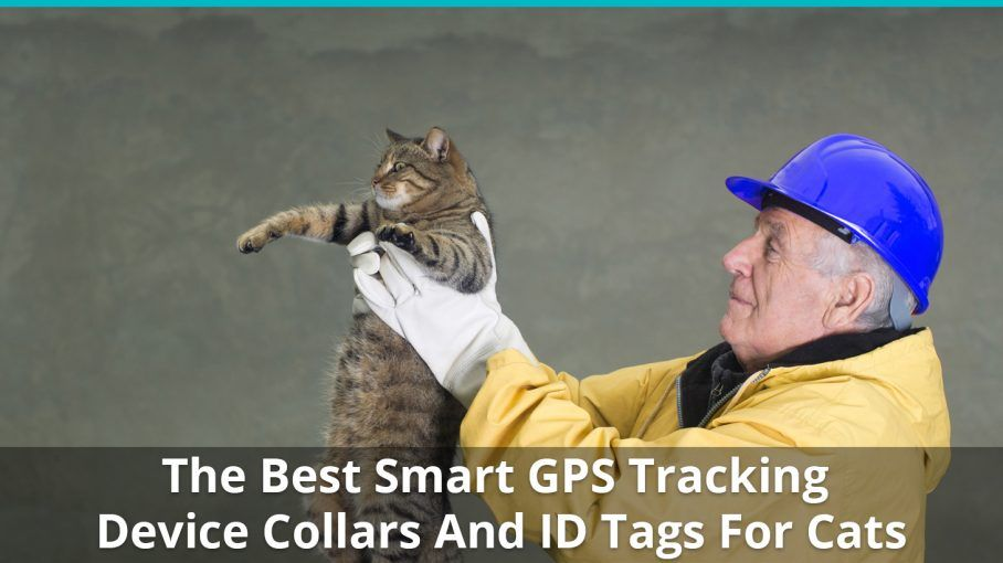 Best Way To Gps Track Cats