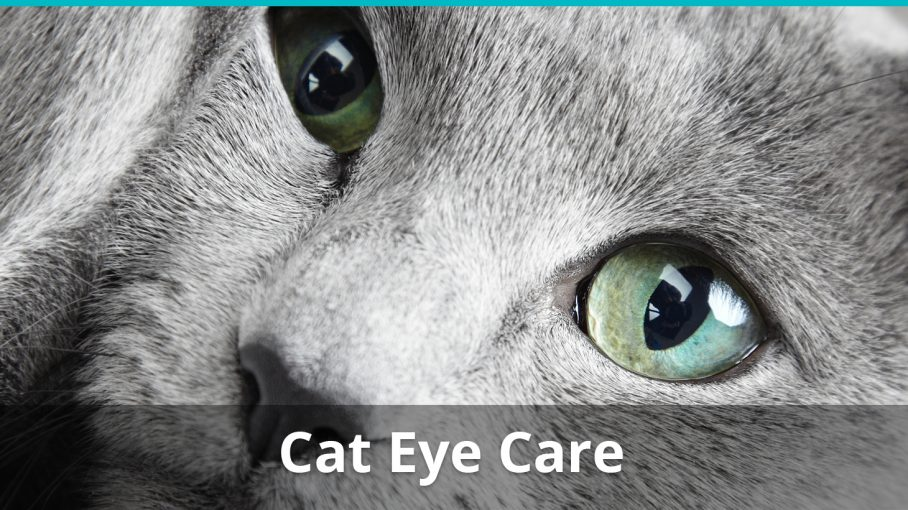 Cat Eye Problems And Care What You Should Know In Order To Treat Your Kitty If Something Is Wrong