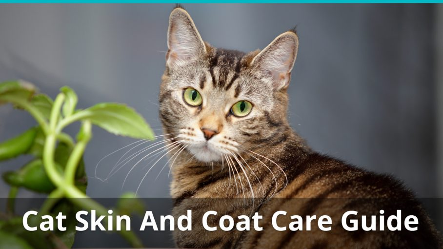 cat skin and coat care guide
