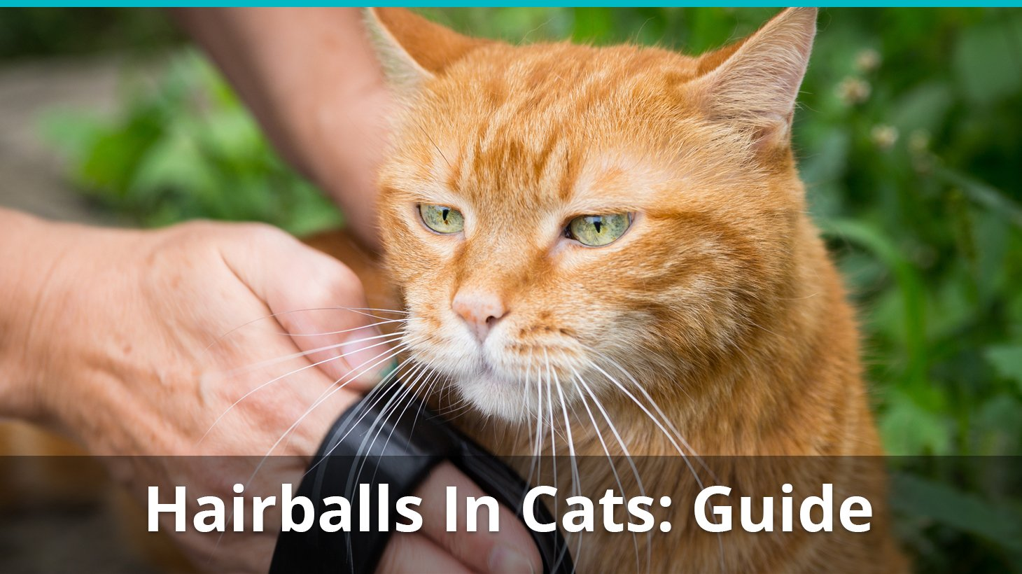 Hairballs In Cats Symptoms Dangers And How To Get Rid Of Them