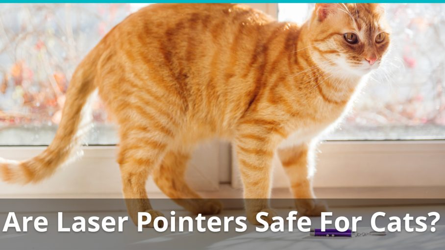 laser pointers safe for cats