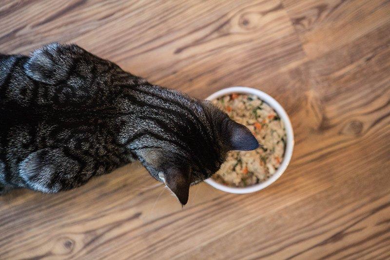nom nom now cat food