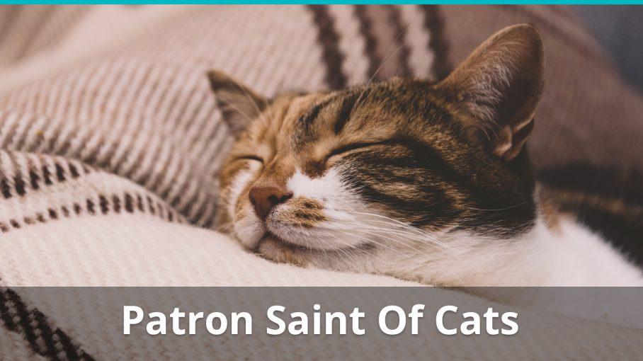 patron saint of cats