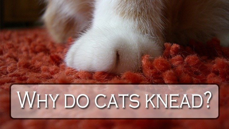 Why do cats put their paws on you