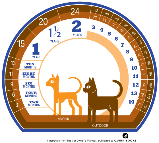How Long Do Cats Live And How To Calculate Your Kitty S Age In Human Years