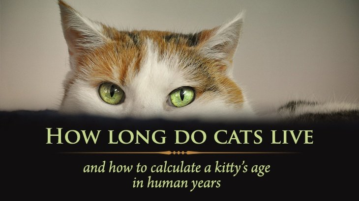 how long do cats live - 730×410