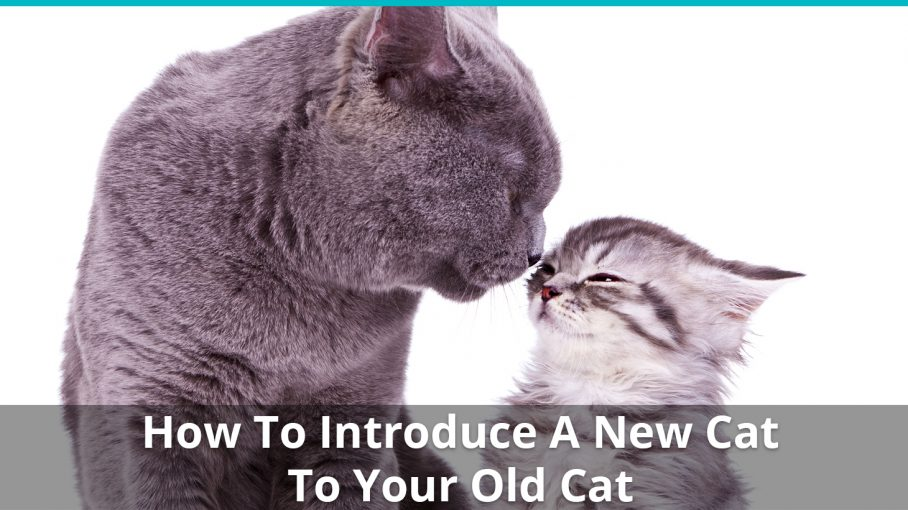 how to introduce new cat old cat