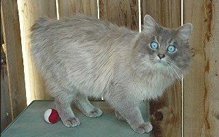 Owyhee Cat