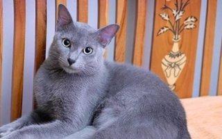 Raas Cat