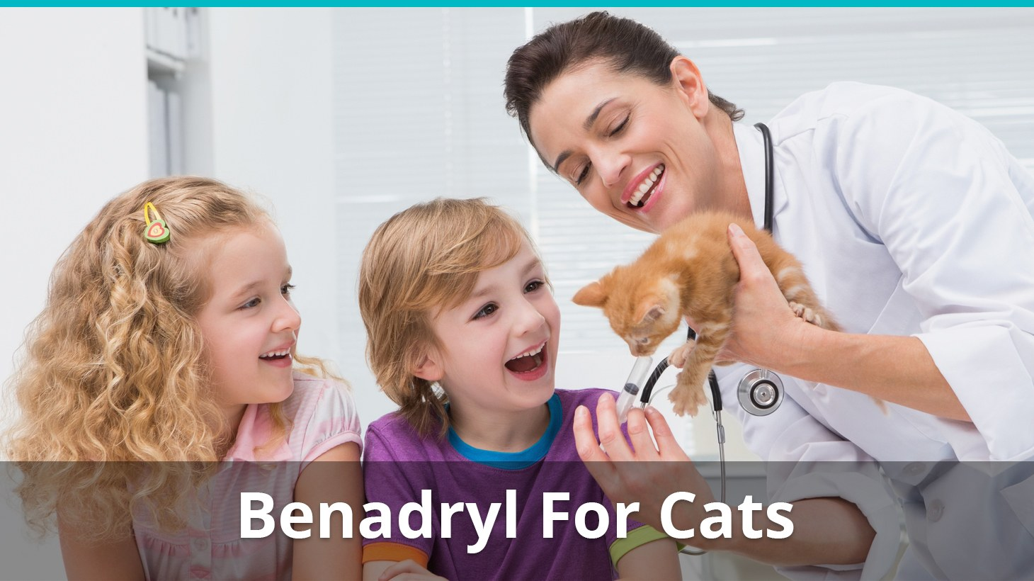 Benadryl For Cats Dosage