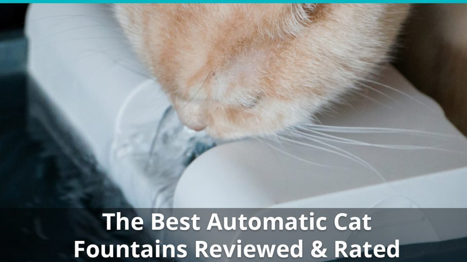 Best Pet Water Fountains For Cats & Kittens | Reviews & Ratings in 2018