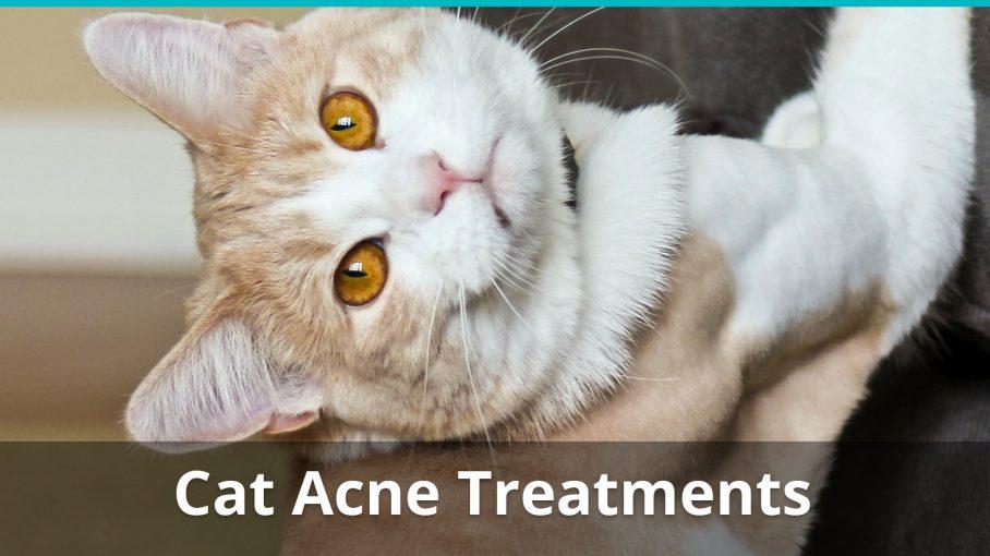 cat acne treatment