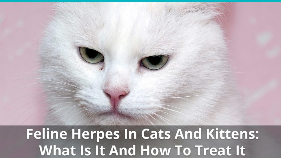 feline herpes cats kittens