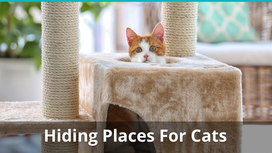 hiding places for cats