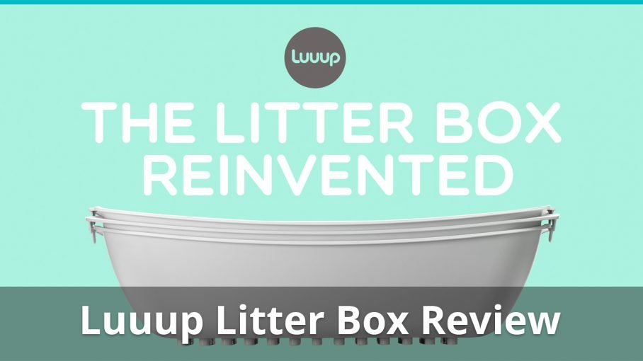 luuup cat litter box review