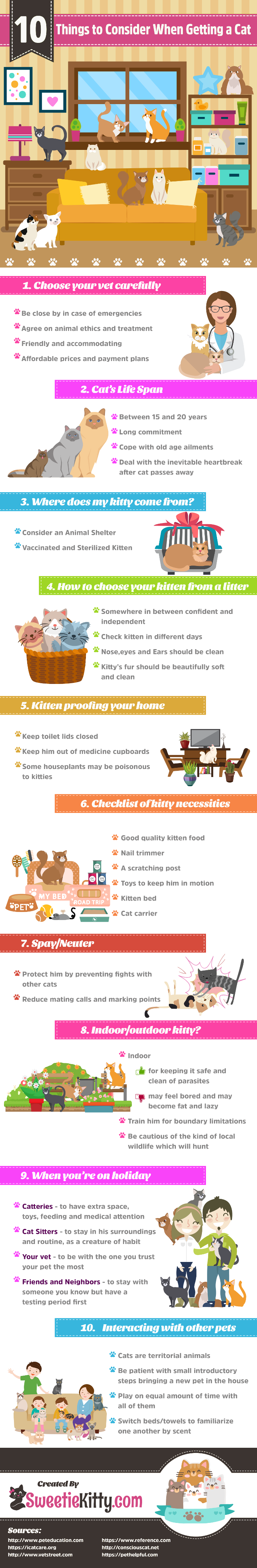 10 Things to Consider Before Getting a Cat