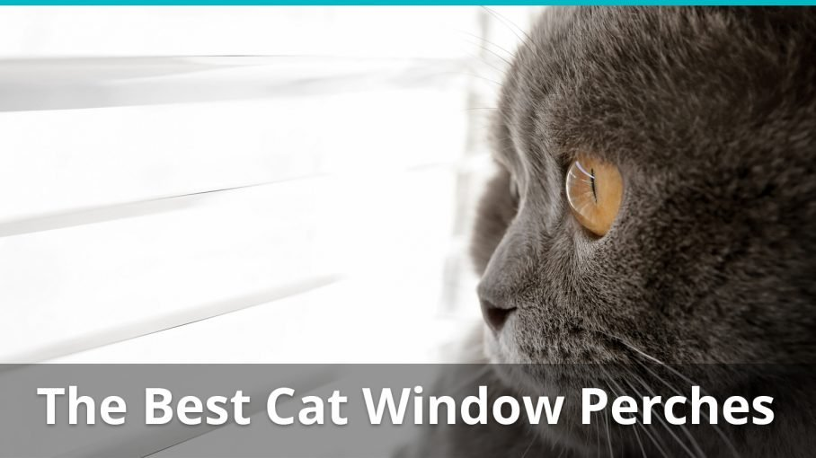 best cat window perches reviewed