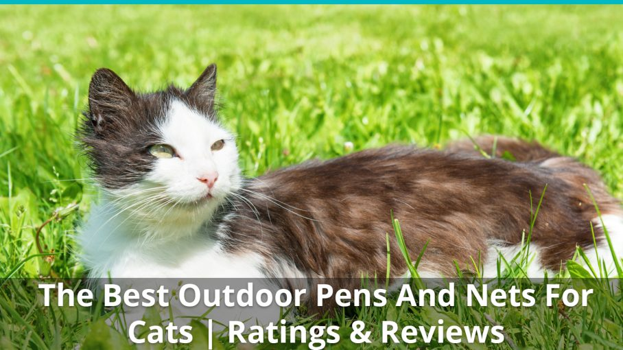best outdoor pens nets cats