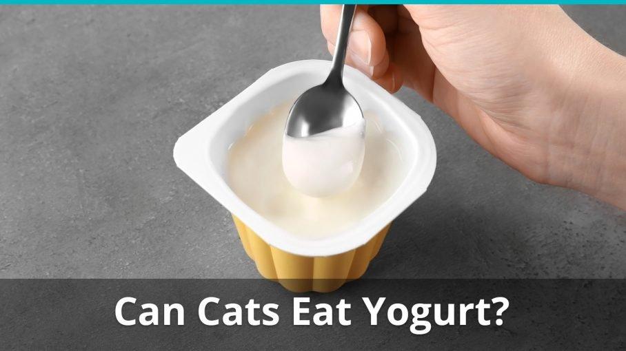 can cats eat yogurt