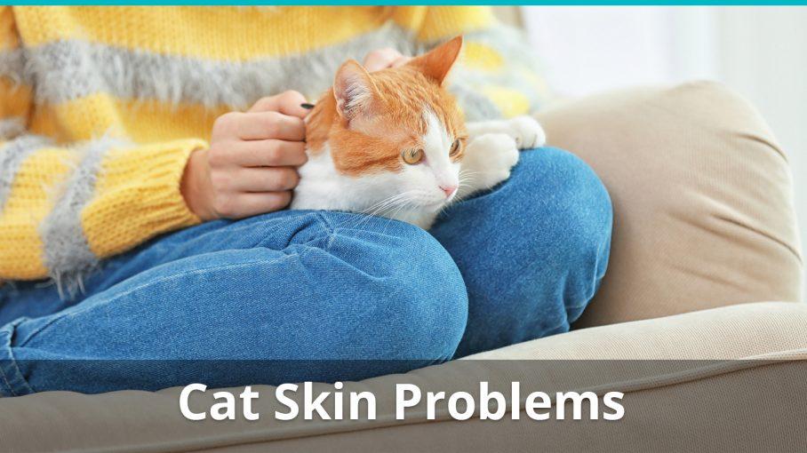 cat skin problems