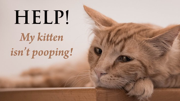 Why Do Cats Start Pooping Outside The Litter Box