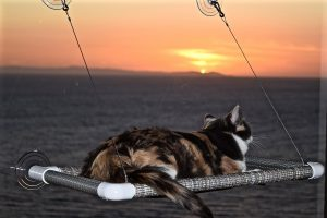 kitty cot perch