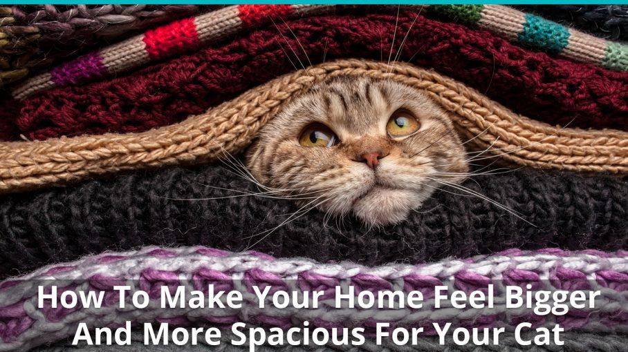 make home bigger spacious cat