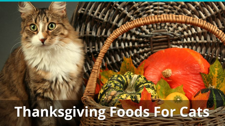 thanksgiving foods safe for cats