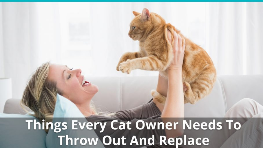 things every cat owner should throw out replace