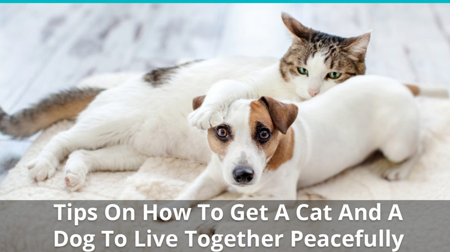 tips dog cat live together peaceful