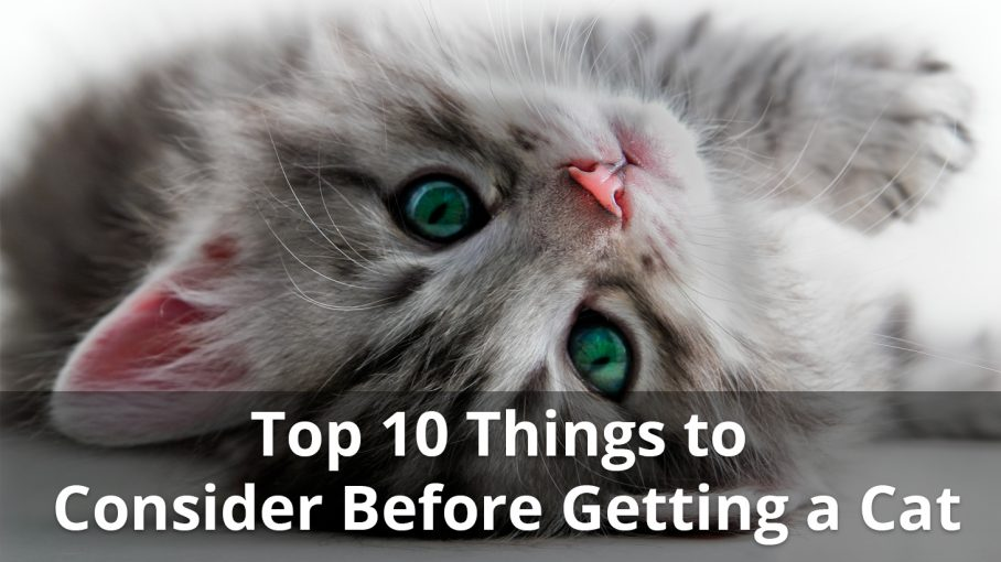top 10 things to consider before getting a cat infographic title