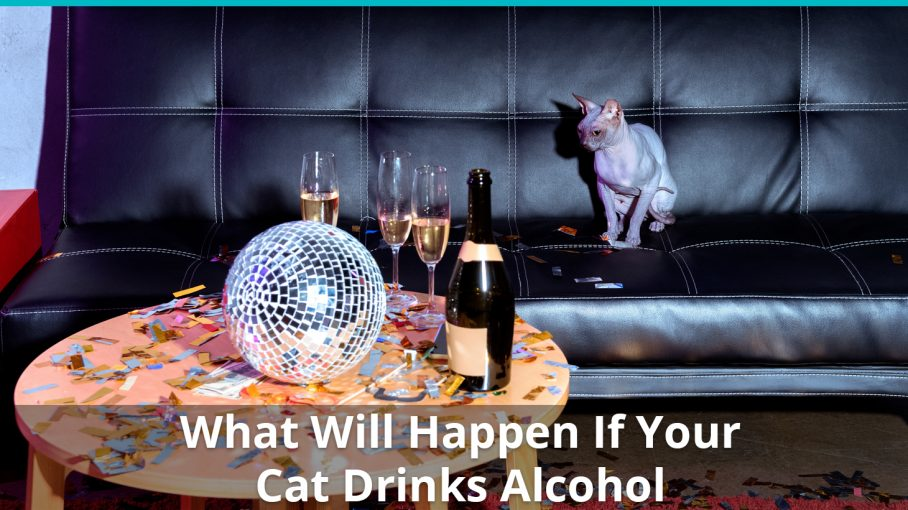 what will happen if cat drinks alcohol
