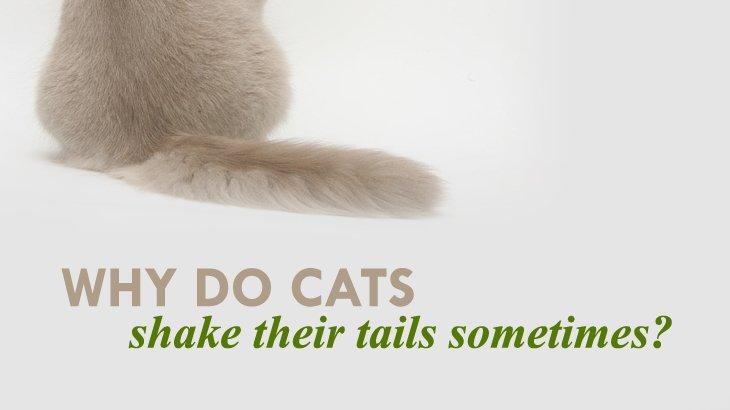literary cat names