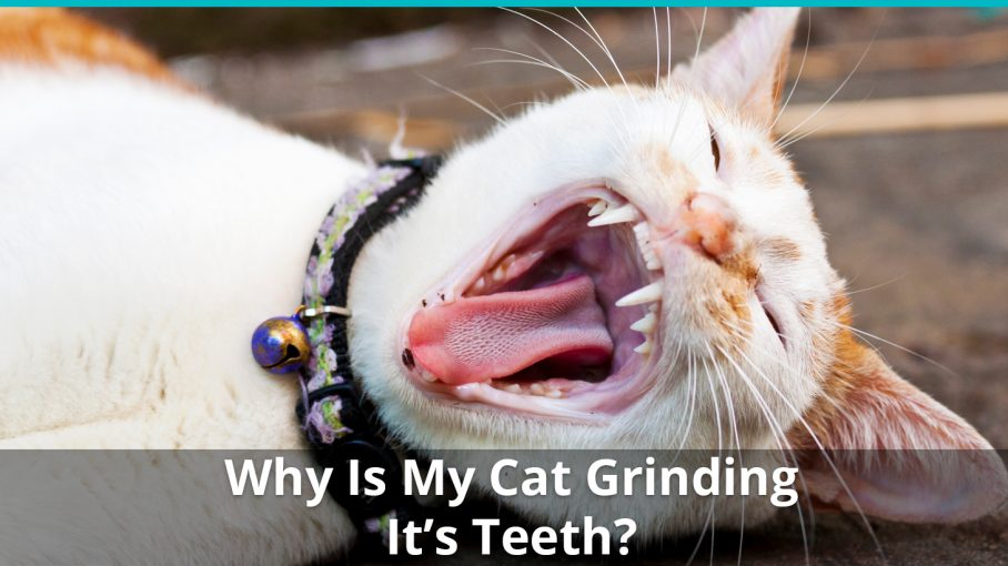 why is cat grinding teeth