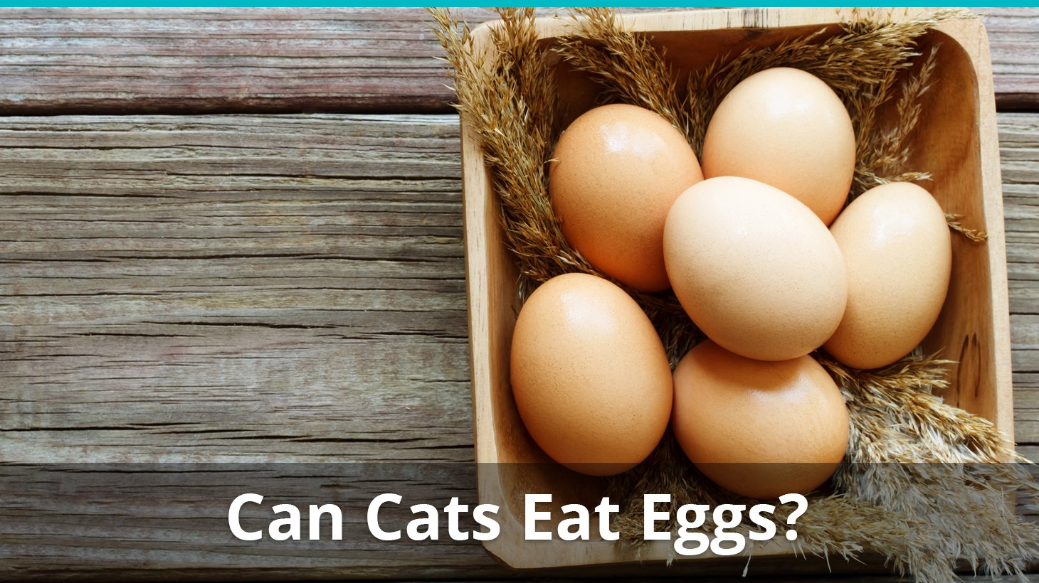 Can Cats Eat Eggs? Are They Safe And Good, Or Bad For Them?