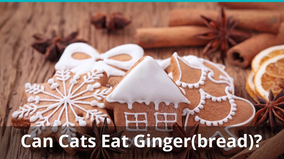 Can Cats Eat Ginger Or Gingerbread Is It Good And Safe Or Bad