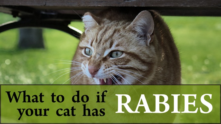 the causes and treatment of the disease rabies Causes it rabies is a severe, viral disease that can affect all mammals, including humans infection results in damage  exposure treatment can be started.