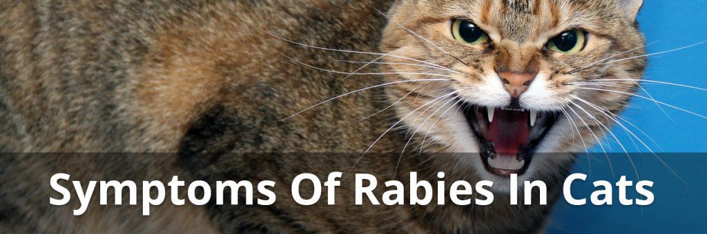 rabies symptoms