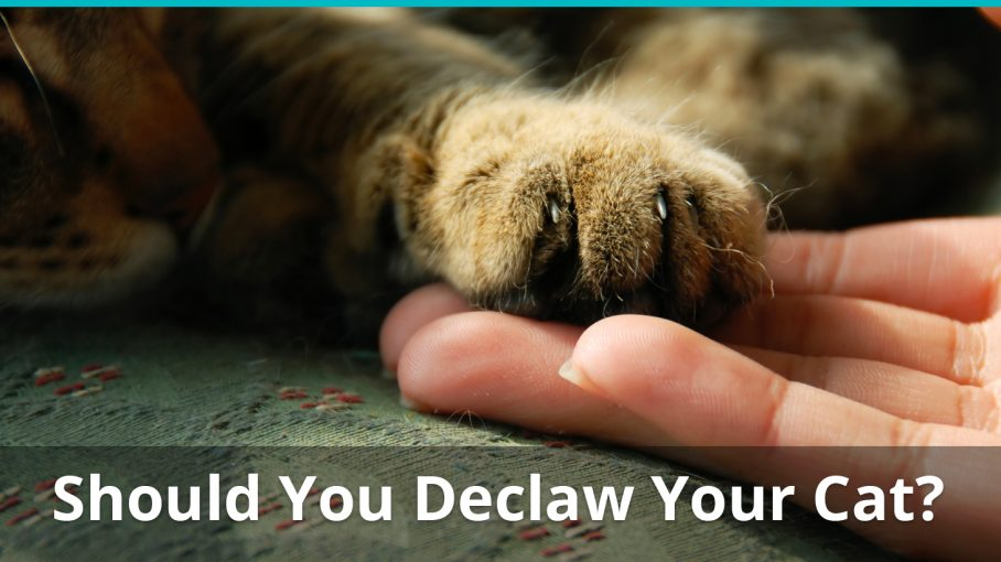 should you declaw cat