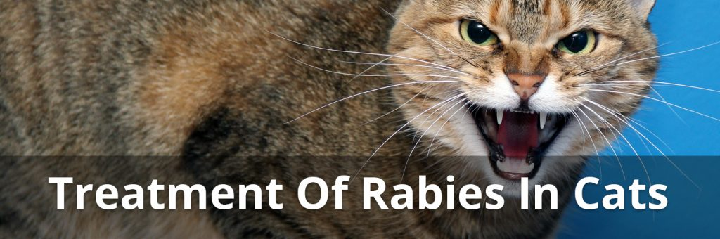 treatment of rabies in cats