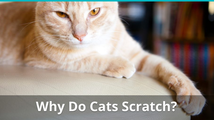why do cats scratch