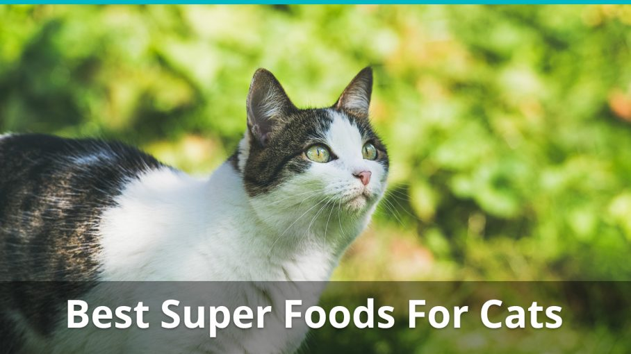 best super foods for cats