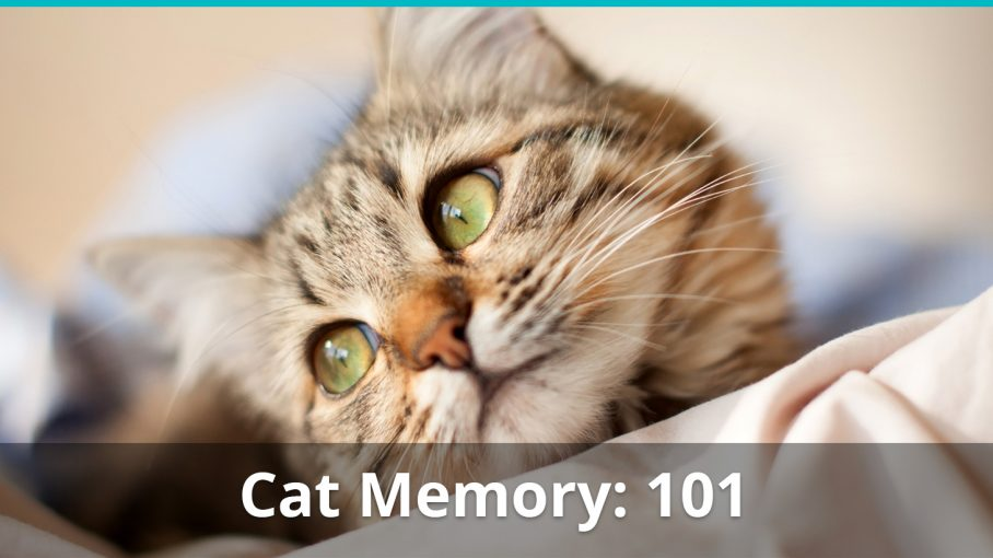 cat memory remember