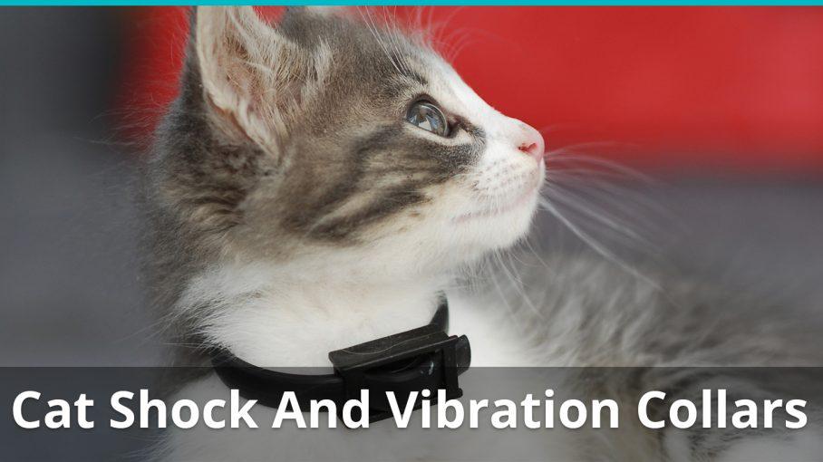 cat shock vibration collar