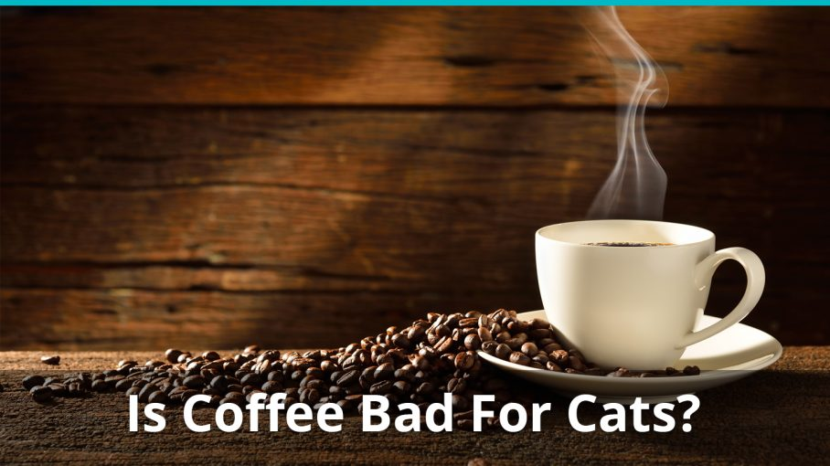 is coffee bad for cats